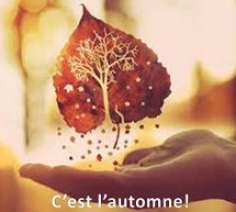 C'est l'automne !! La saison idéale pour…