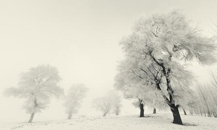 Un hiver parfois brumeux, ou oser traverser ses propres brumes intérieures